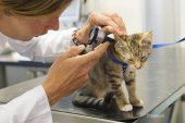 why-your-cat-needs-regular-checkups-504787555